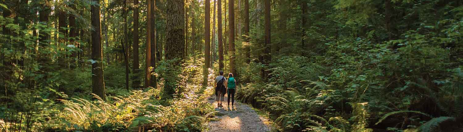 Couple hiking through sunlit woods
